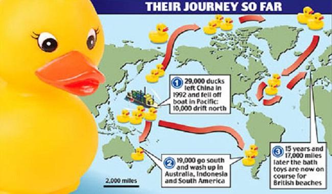 canards en caoutchouc perdus en mer
