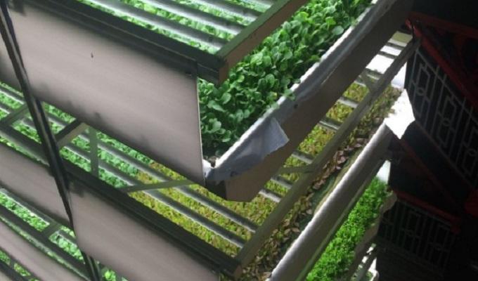 AeroFarms agriculture du futur
