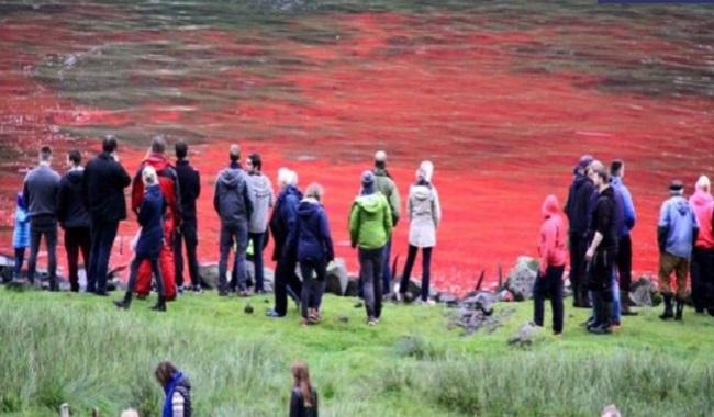 Baleines massacrées sur les Iles Féroés