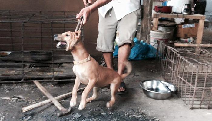 Ching activiste sauve de chiens en Chine (2)