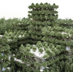 Bamboo maison écolo