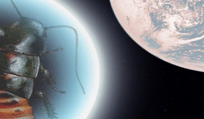 Cafard dans l'espace