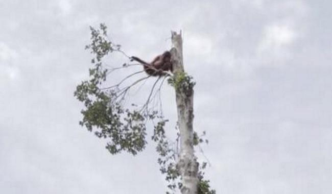 Le résultat de la consommation d'huile de palme