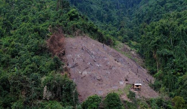 Nature sauvage décimée