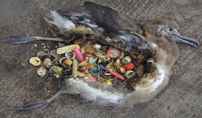La pollution tue les oiseaux de mer