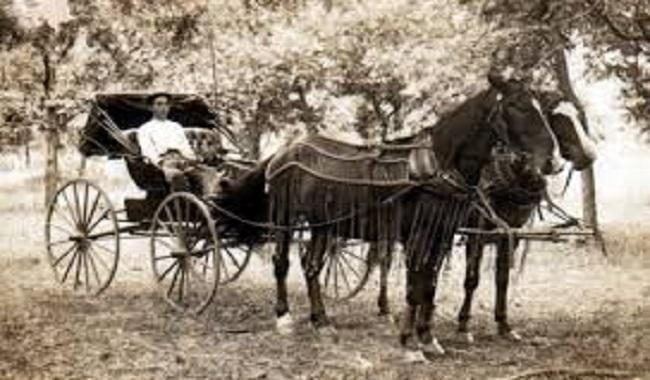 es chevaux étaient à l'origine de la pollution alors que les voitures étaient considérées comme une alternative écologique